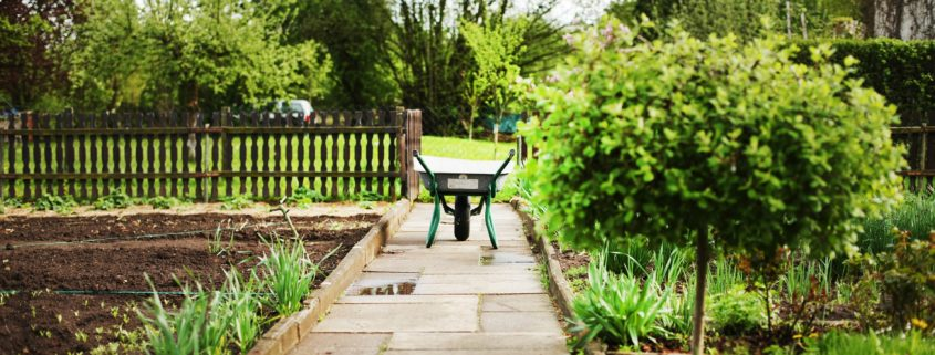 5 Back Health Tips for Gardeners
