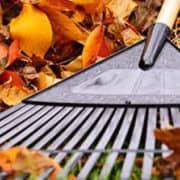 Avoid Lower Back Injury while raking leaves